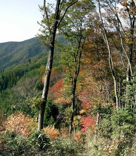 出来山への稜線よりの寧比曽岳